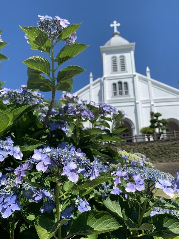 大江教会と紫陽花