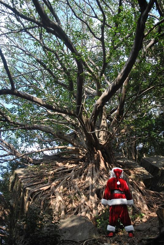 西平椿公園のラピュタの木を眺めるサンタ