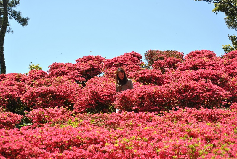 天草下島最高峰の天竺山頂はツツジがいっぱい
