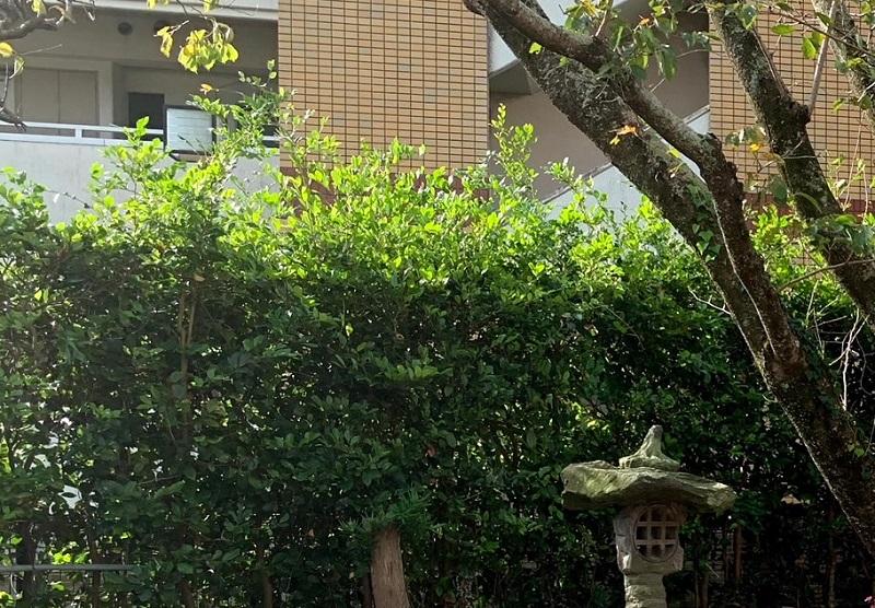 伸び放題の庭木